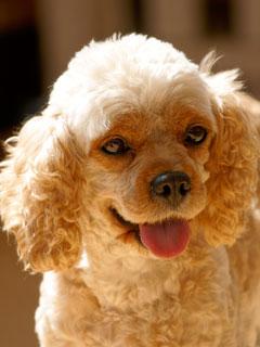 犬の画像 p1_29